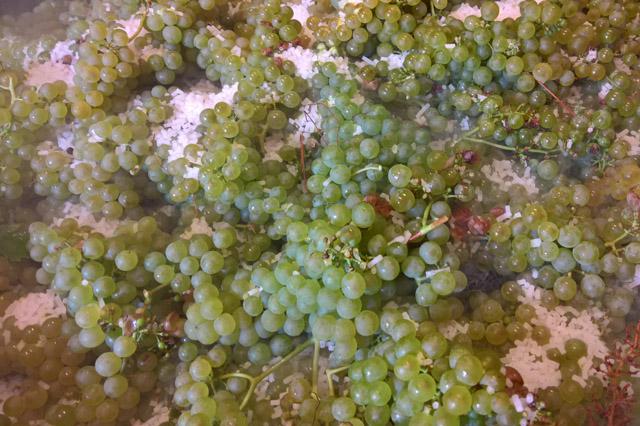 Ghiaccio secco uso alimentare enologia Friuli Vendita